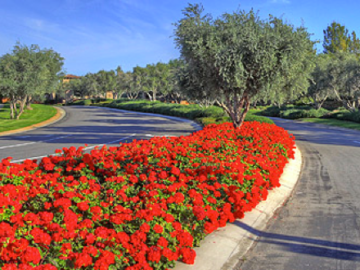 Toscana Country Club community