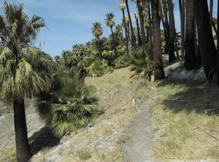 Willis Palms and West Mesa Trail